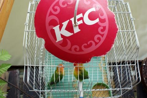 KFCbirds